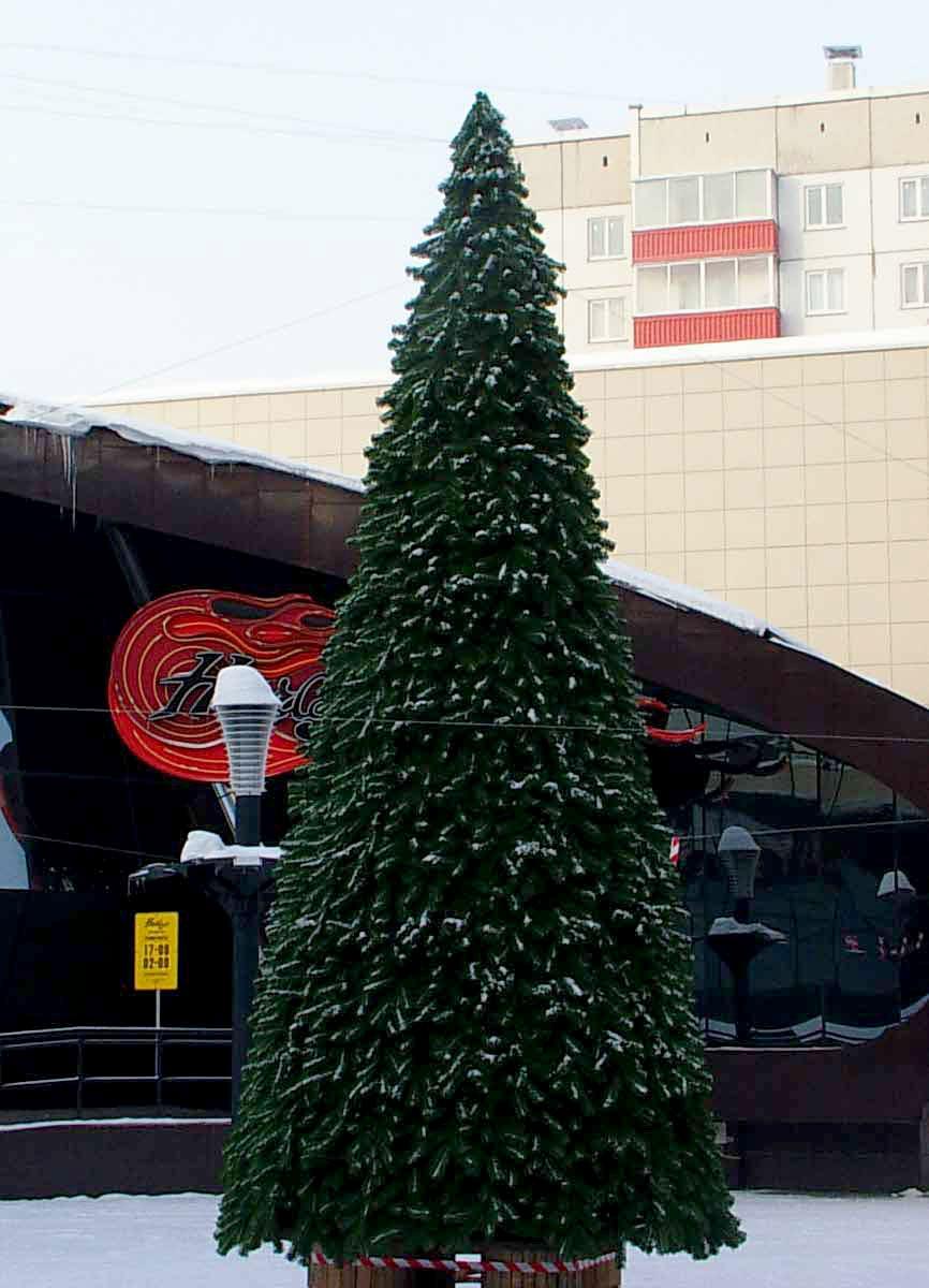 Уличная елка Сосна сибирская